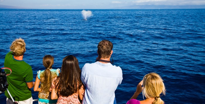 whale watchers watching a whale from a boat