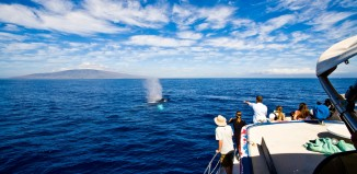 a whale watching boat with people watching a whale