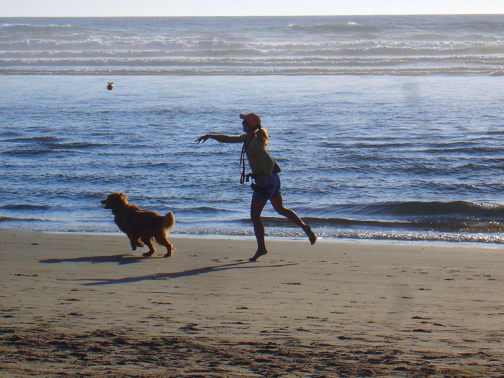 Fun With Fido At Hawaii Dog Friendly Beaches Part I