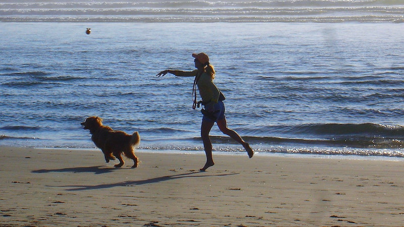 Fun with Fido at Hawaii Dog-Friendly Beaches-Part I