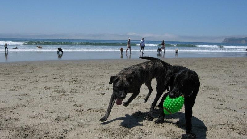 Fun with Fido at Hawaii Dog-Friendly Beaches-Part II
