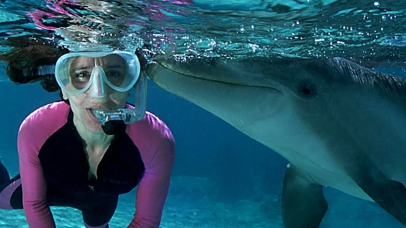 What's In Store for Dolphin Tours in Hawaii?