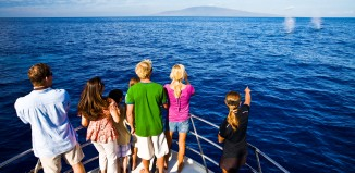 people on deck a boat watching whales