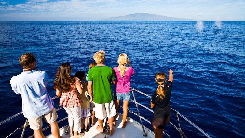 Choosing an Eco-Friendly Hawaii Whale Watching Tour