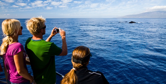 people taking a picture of a whale off a boat