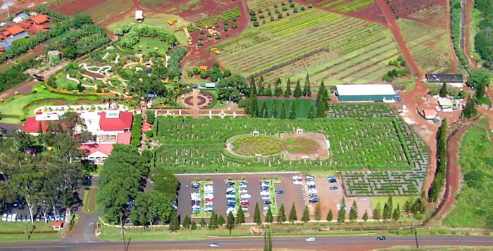 an aerial view of dole plantation