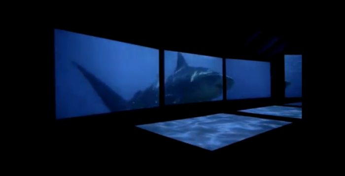 a shark on a screen