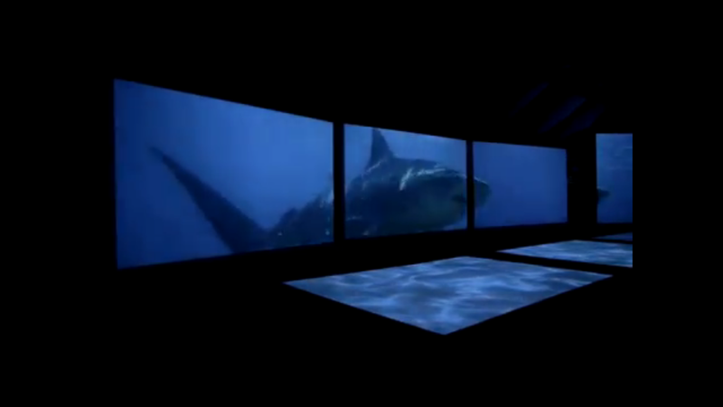 Sharks Invade Hawaii (in a New Exhibit) !