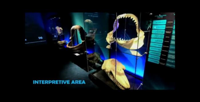 shark jaws on display