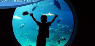 a boy looking at an aquarium