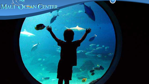 a boy looking at an aquarium