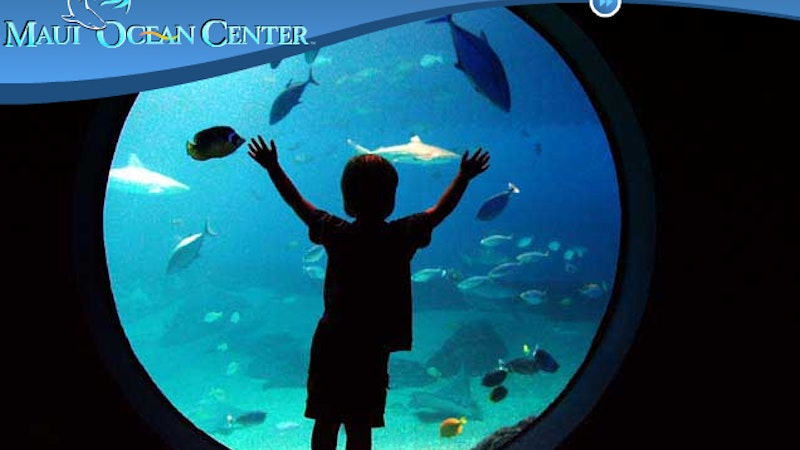 New Discoveries, New Attractions at the Maui Ocean Center in Hawaii