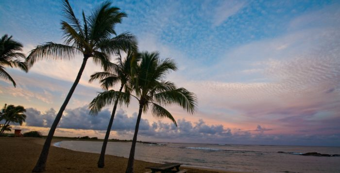 palm trees and sand at salt pond beach park on kauai