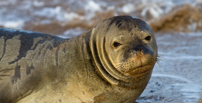 a monk seal on a beach