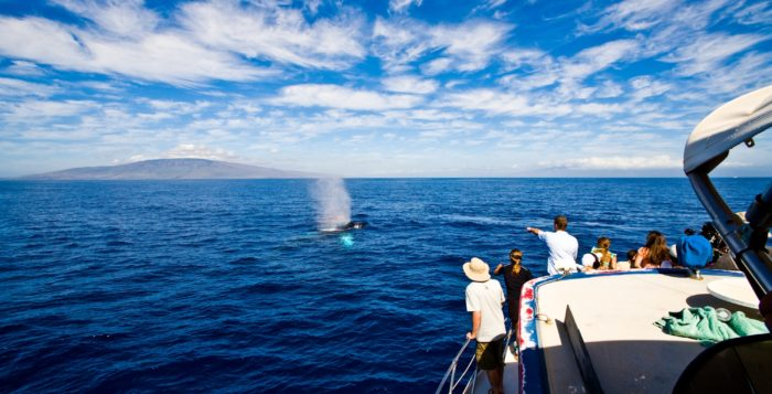 a boat with passengers watching a humpback whale