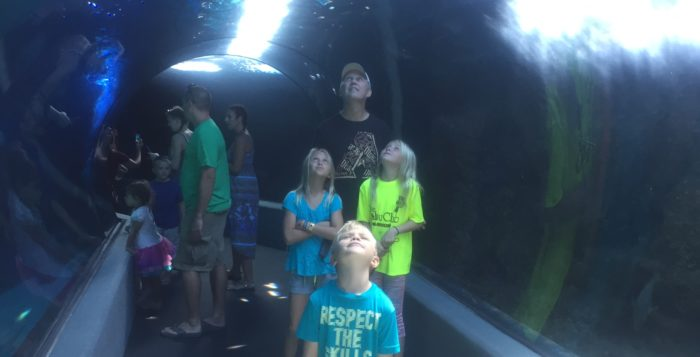 a family looking up at fish