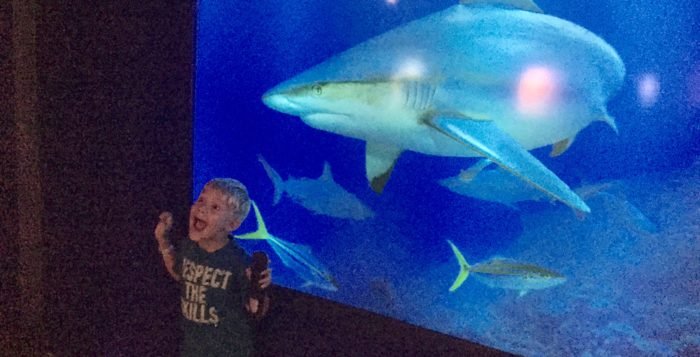 a boy scared of a shark