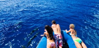 a group of people on a boat looking at dolphins