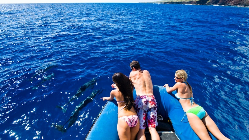 You Can Help Decide the Fate of Dolphin Tours in Hawaii