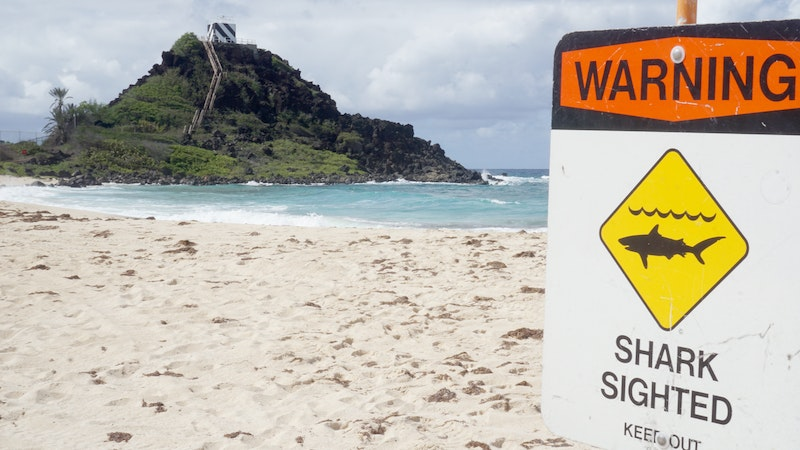Why Do Shark Attacks in Hawaii Spike in October?