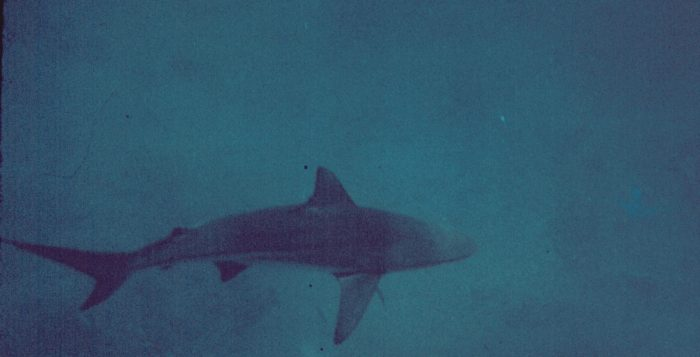 a shark swimming in murky water