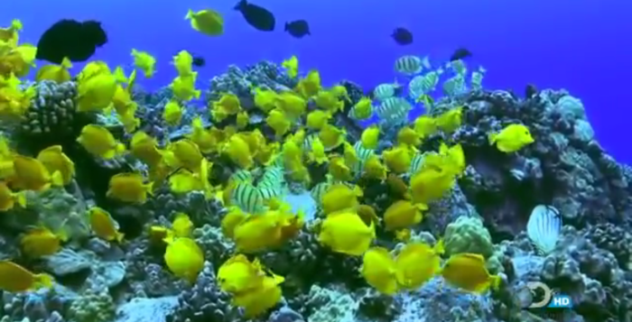 a screenshot of a video featuring fish