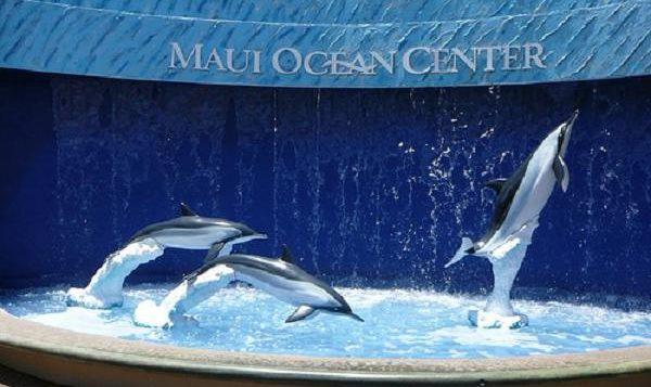 Front of Maui Ocean Center