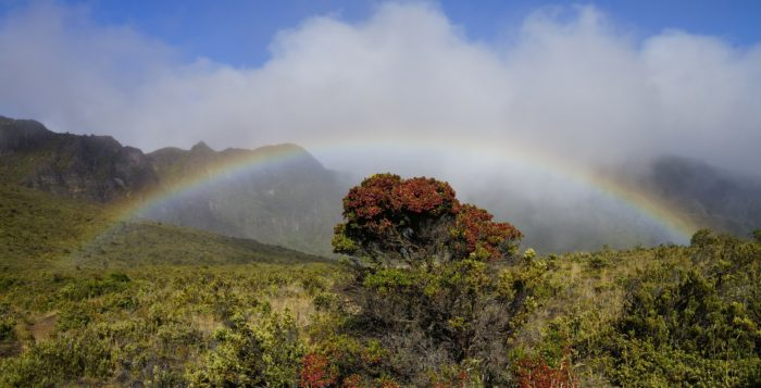 In Hawaii, a wintery mix of sun and rain often make for the most beautiful and picturesque rainbows.