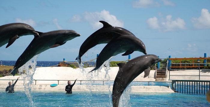 Dolphins jumping at Sea Life Park