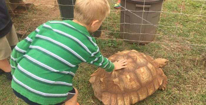 a boy petting a tortoise