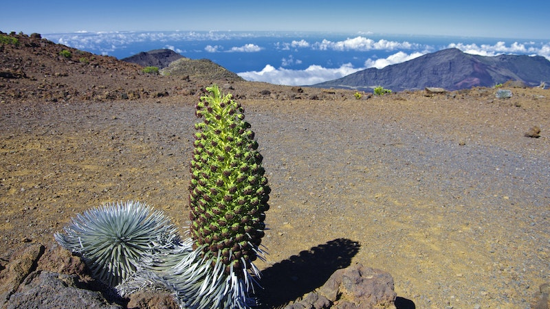 Make It a Volunteer-cation! How To Make Your Visit To Hawaii Count