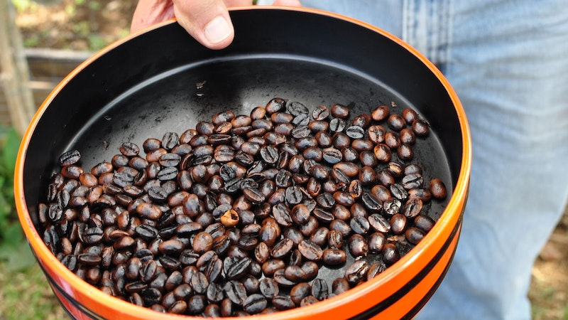 Be a Kona Coffee Farmer for a Day in Hawaii!