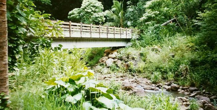 Footbridge in Waimea Valley
