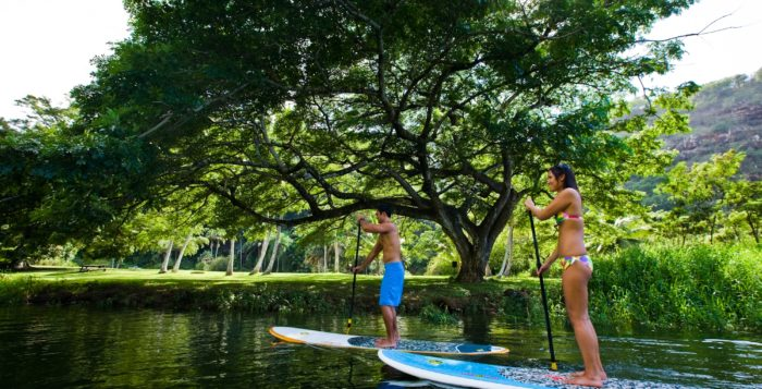 Paddle boarders in Waimea Valley Park