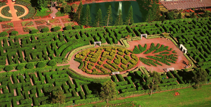 Aerial view of Pineapple maze