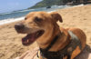 Through the Kauai Humane Society, you can take a shelter dog on a field trip during your vacation on Kauai.