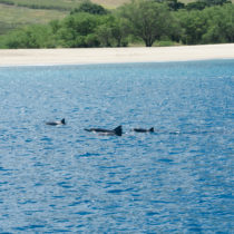 I saw so many dolphins on the Dolphin Watch Eco Tour!