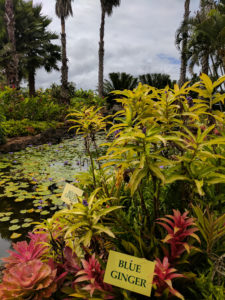 The Plantation Garden features many plants important to Hawaii.