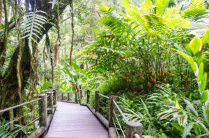 The Palm Vista Trail in the Hawaii Tropical Botanical Garden.