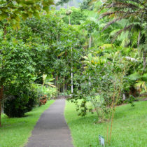 Hoʻomaluhia Botanical Garden is a place of peace and tranquility. Here, you can wander gardens, picnic at scenic overlooks, look at art, fish, camp, and paint.