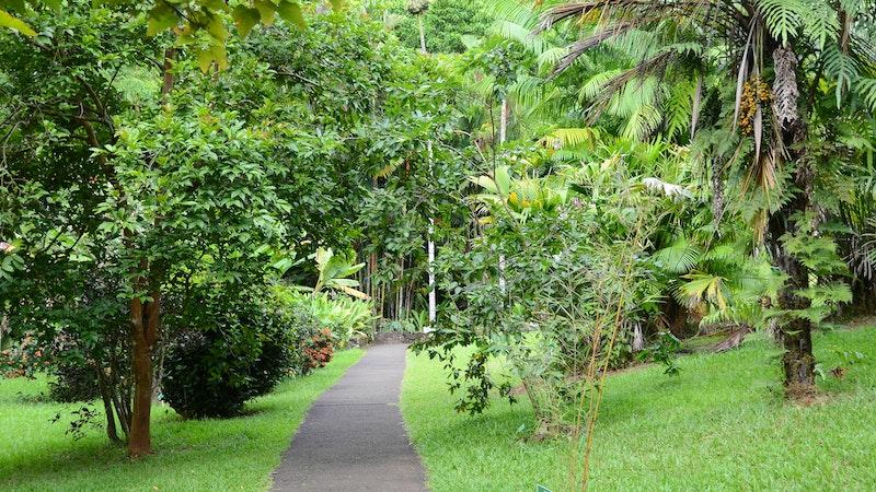 Hoʻomaluhia Botanical Garden: A free garden for picnics, fishing, camping, and more