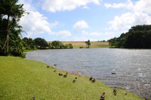 The reservoir at Hoʻomaluhia Botanical Garden.