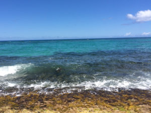 Keep your cameras ready and your eyes peeled for turtles popping out of the water at Laniakea Beach.