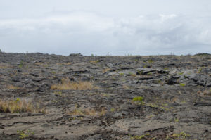 The beginning of the Pu'u Loa Petroglyphs Trail. You will need to walk on lava rock to get to the petroglyphs.