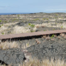 As you walk on the boardwalk on the Pu'u Loa Petroglyphs Trail, you will see many petroglyphs hand-carved by Hawaiians.