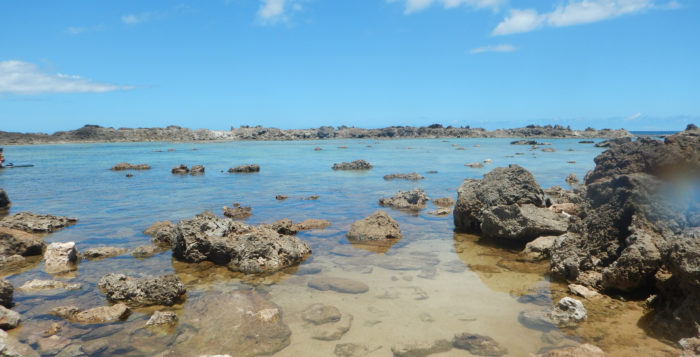 Sharks Cove is a great place to snorkel on the North Shore of Oahu. Just watch out for those rocks!