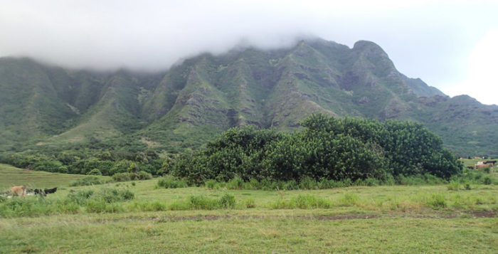 movies filmed on Oahu