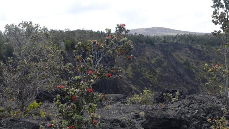 Spooky Hawaiian Legends Not to Ignore