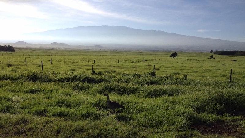 Waimea, Hawaii Island – Cowboy Country
