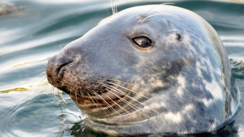 Why your monk seal selfie may harm it.